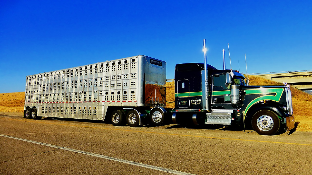 covid-19_cattle_trailer_semi_truck_1280x720